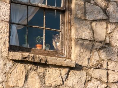 Cat in the window along Dixon Street in Fayetteville Arkansas