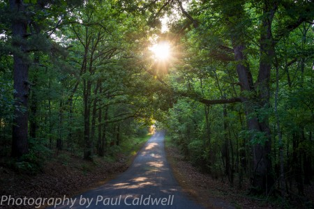Sunrise through the trees in Pulaski County, Arkansas